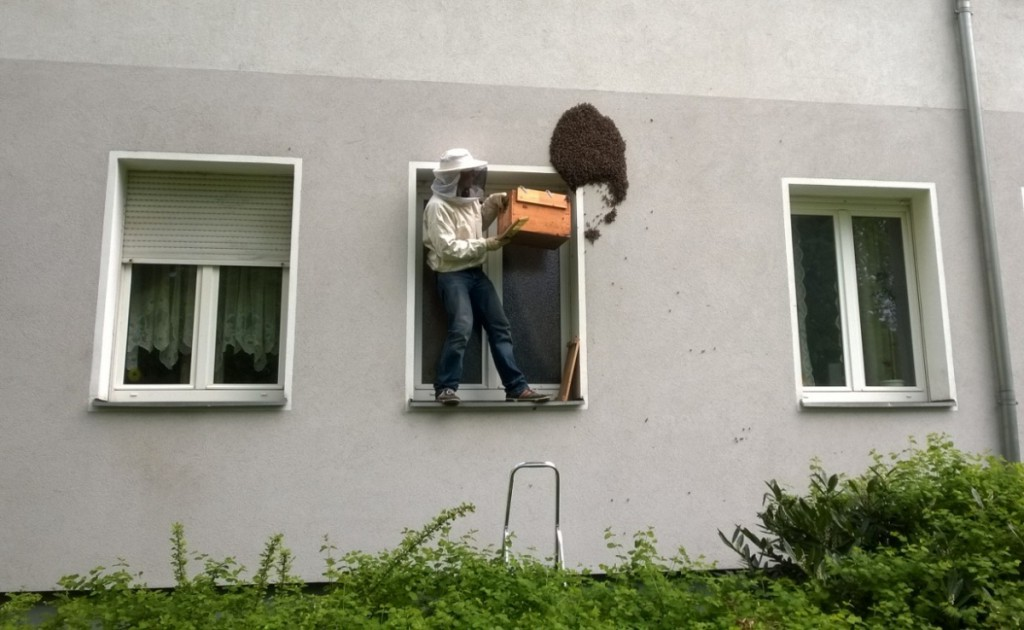 Schwarmfänger-an-HausfassadeFriedrichshain